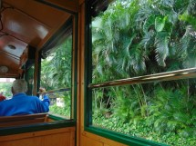 view of plants from a trolley open window