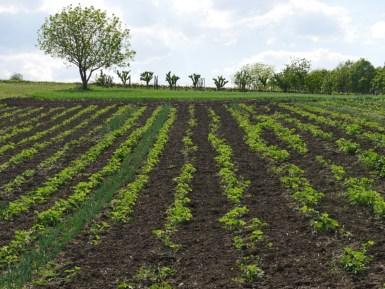 Landwirtschaft in Serbien.