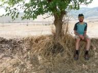 One tree is enoug reason for a rest. // Ein Baum ist Grund genug für eine Pause.