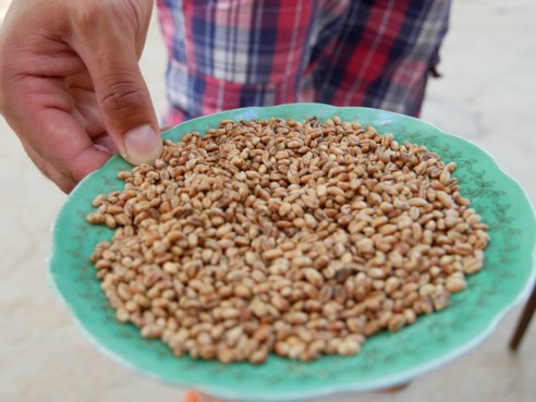 Geröstetes Getreide als Snack. // Roasted grain as a snack.