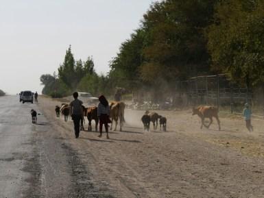 Sheep flock with children in vacation. Hopefully. And a melon shop at the roadside.// Schafsherde mit Kindern, die gerade Ferien haben. Hoffentlich. Und einem Melonenstand am Straßenrand.