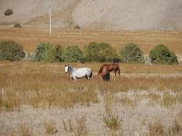 Beautiful Kyrgyzstan.
