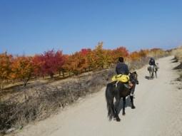 Kyrgyz Summer colours.