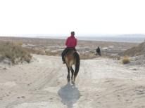 A woman on a horse. // Eine Frau auf einem Pferd.