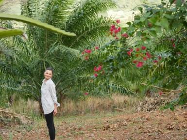 Oil palms and flowers.// Ölpalmen und Blumen.