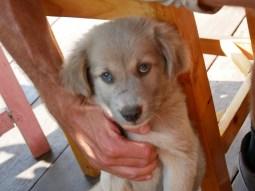 Blue eyes!// Blau Augen!