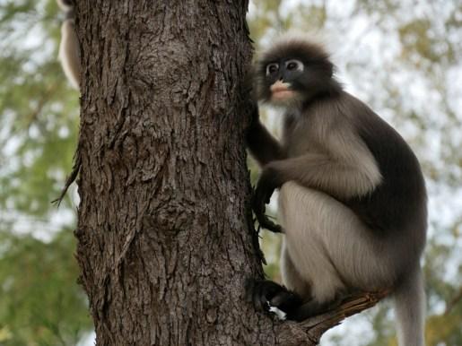 Affe.//Monkey.