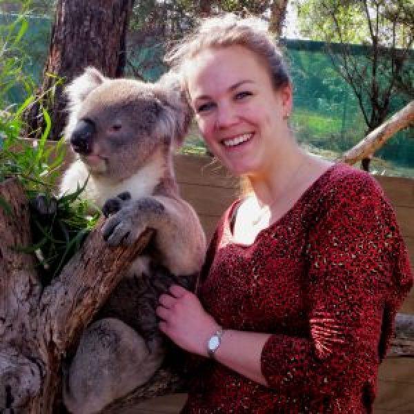 Koala-knuffelen