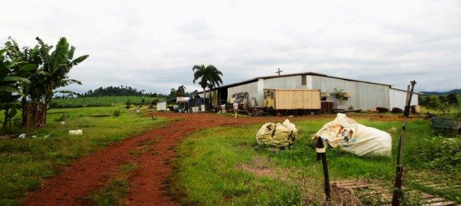 Wereldreis #13 | Staking op de boerderij in Australië