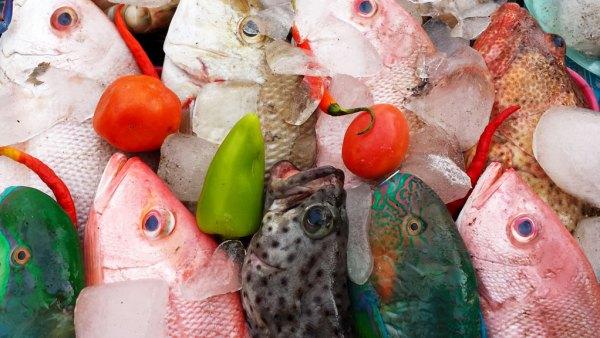 Verse-vis-van-de-Filippijnen