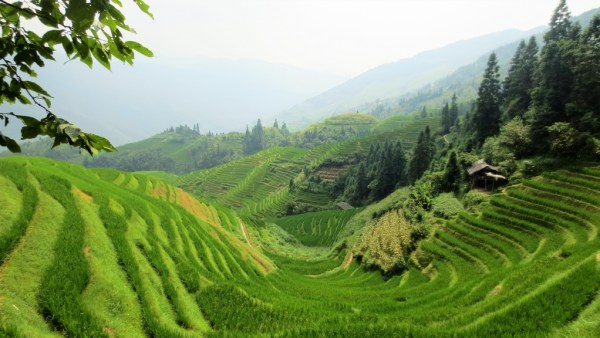 Longsheng rice terraces Ping'an