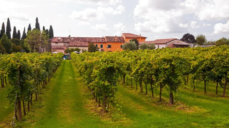 The house and the vineyards of Corte Aleardi