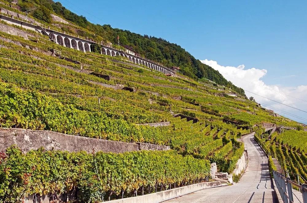 Terrasses de Lavaux trail