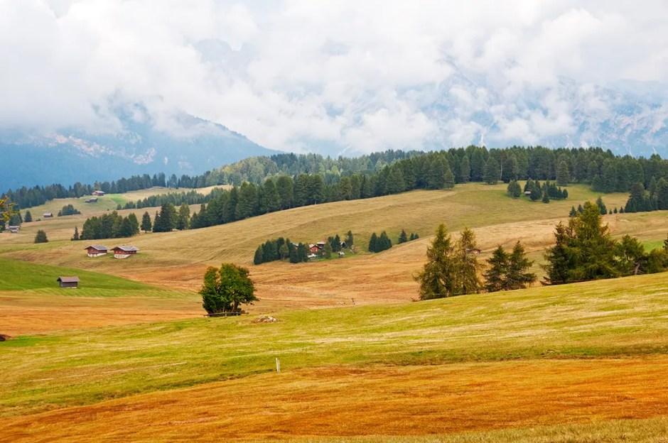 High meadow of the Alpe di Siusi area, Italy