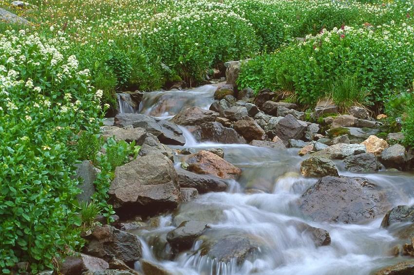 Waterfall and foliage in American Basin, near Lake  City, Colorado, USA