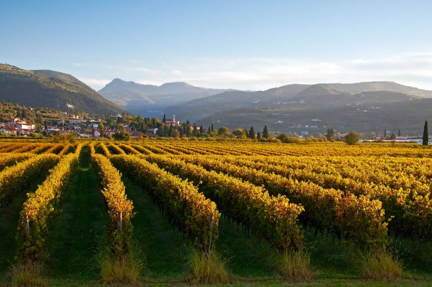 The vineyards of the Valpolicella region of Italy near San Pietro in Cariano