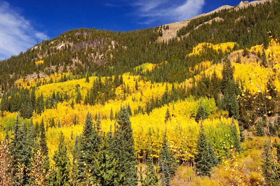 The autumn colors on the road to Guanella Pass, Colorado