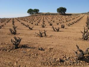 DOマンチュエラにあるホテカ・イニエスタのブトウ畑