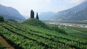 トレンティーノ地方の山に囲まれた葡萄畑
