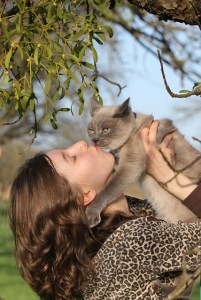 chat gros calin