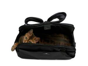 chat dans sac transport