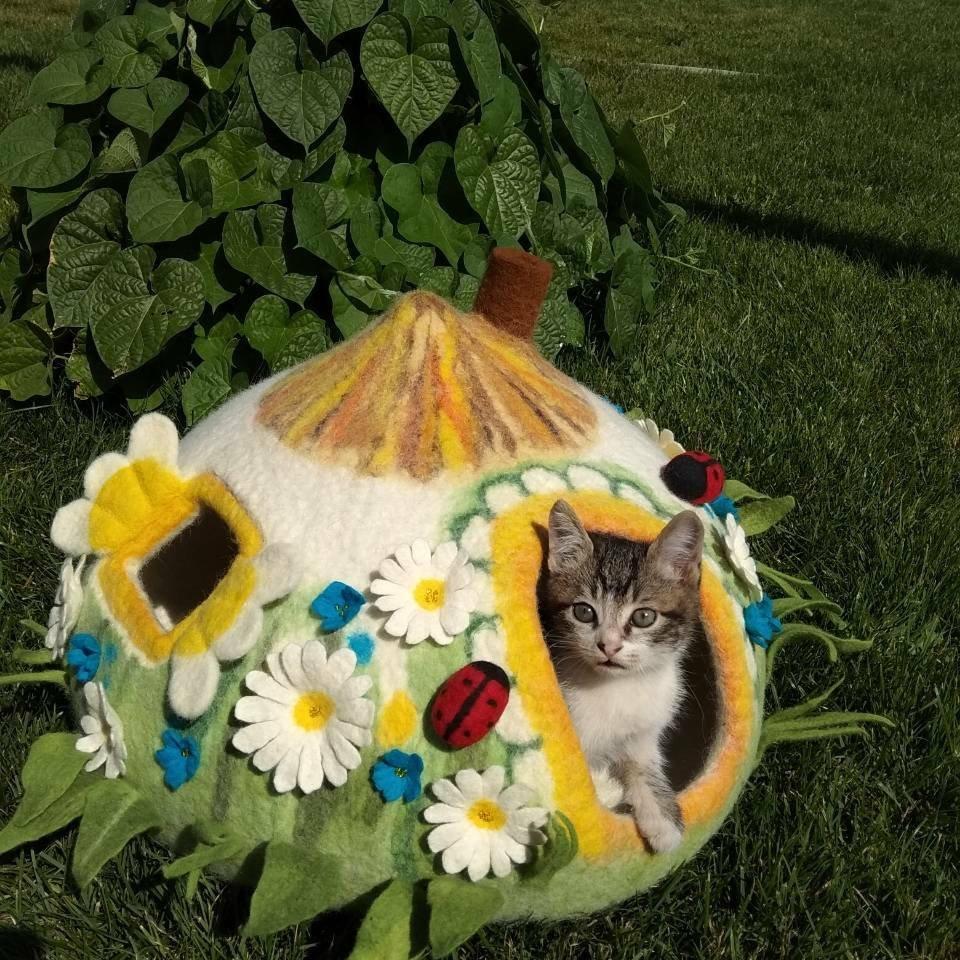 grotte chat nature fleur coccinelle