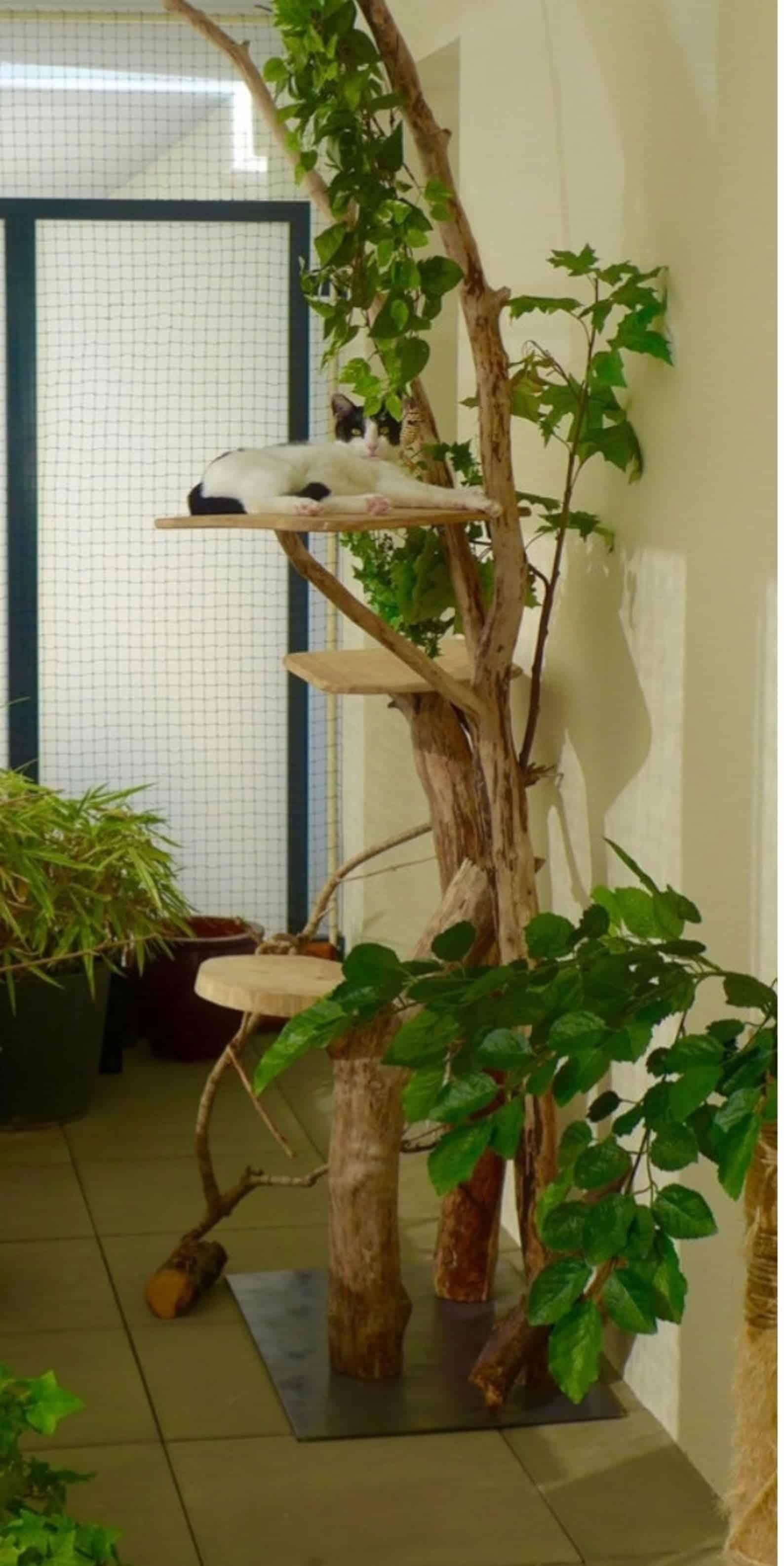 arbre-a-chat-france-bois-flotte-feuilles-branche