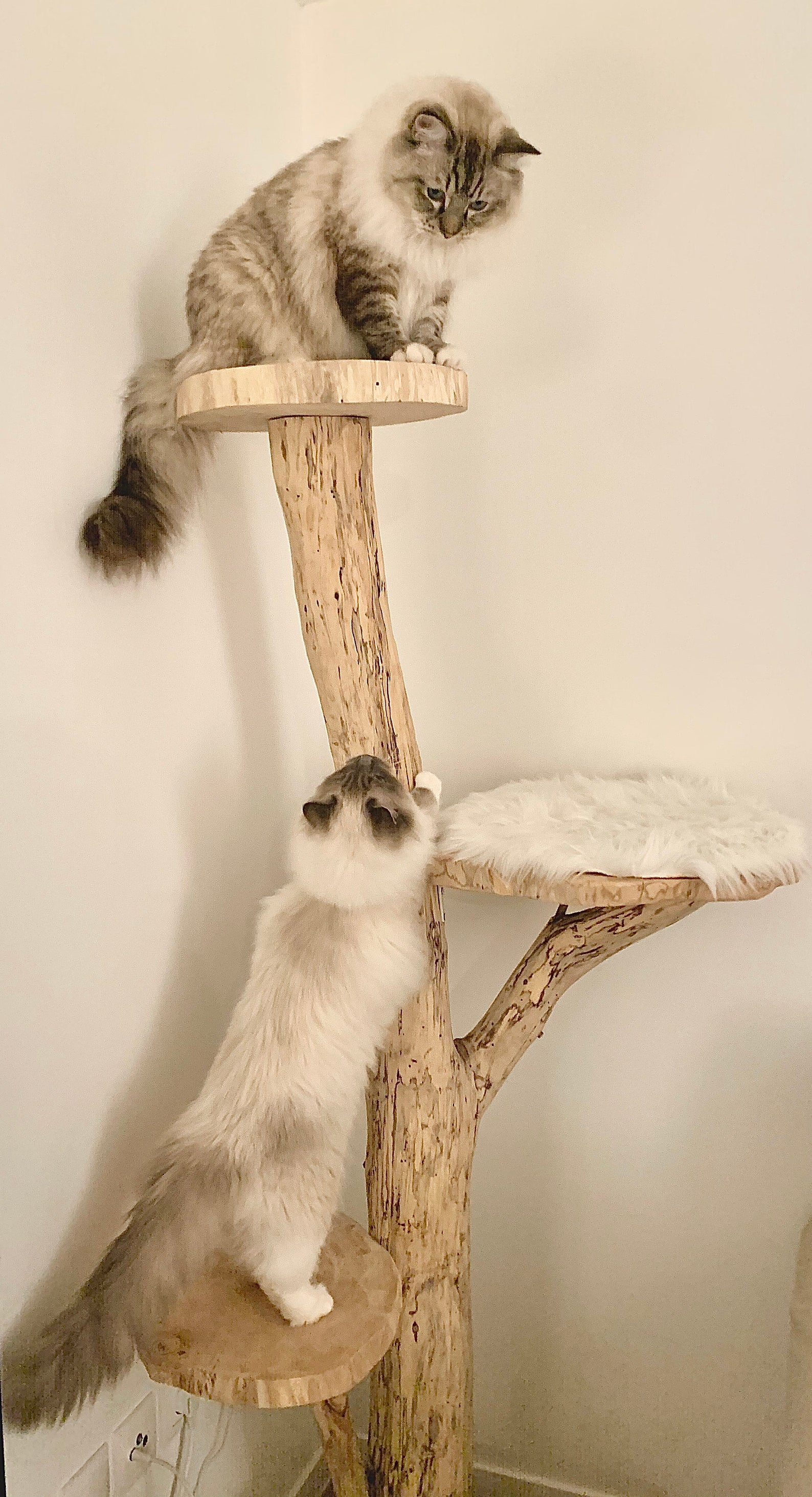 arbre-a-chat-original-tronc
