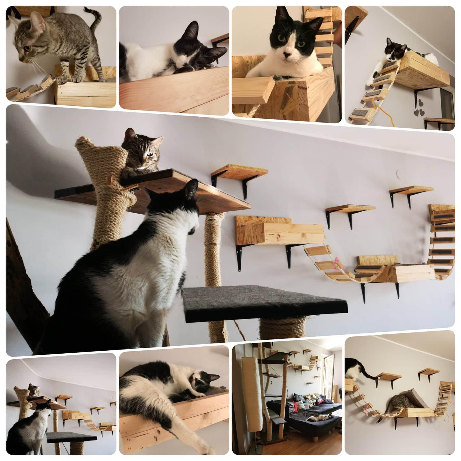 arbre a chat mural design caisson lattes