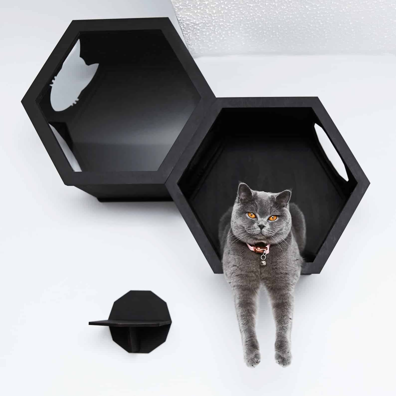hexagone mural ouverture felin