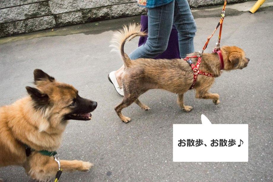 りかちゃん散歩
