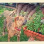 庭のリカちゃん