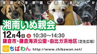 2016/12/2 湘南いぬ親会