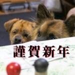りかちゃんの謹賀新年
