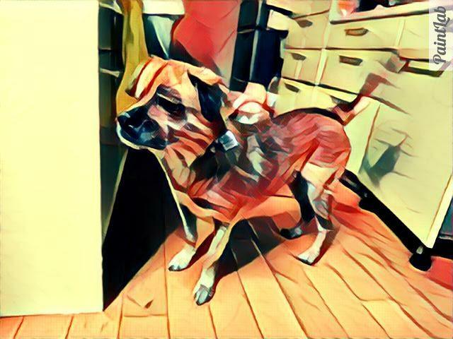 加工された保護犬リカちゃん 里親募集中