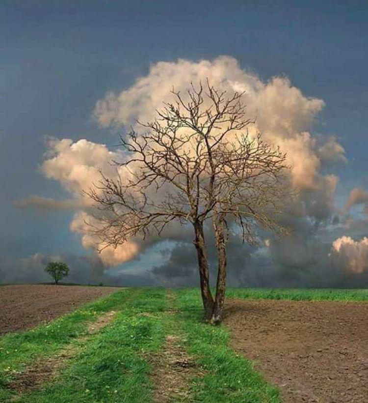 arbre-nuage