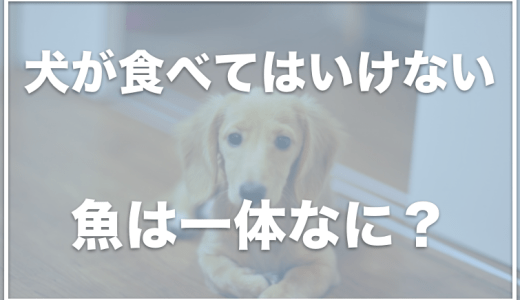 犬が食べてはいけない魚は何?犬にほっけは食べさせない方がいいのか調査!