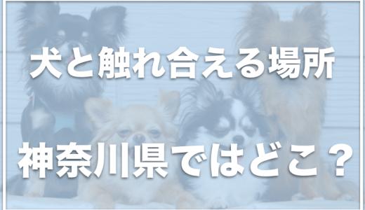 犬と触れ合えるカフェ・場所は神奈川県ではココ!入場料無料の施設も!?