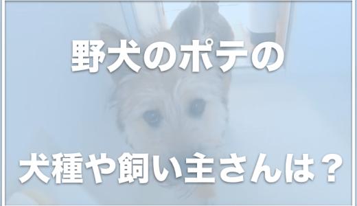 ベーコン家のポテ(野犬のポテ)の飼い主に批判!?北海道に住んでる?犬種を調査!