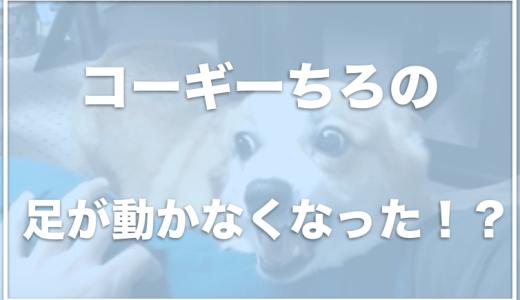 コーギーちろの飼い主は鈴木智呂さん?ちろの足が動かなくなった!?