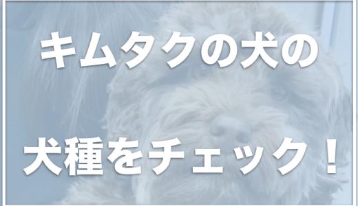 キムタクの犬の値段・犬種は?アム(アムール)の犬種は何かチェック!