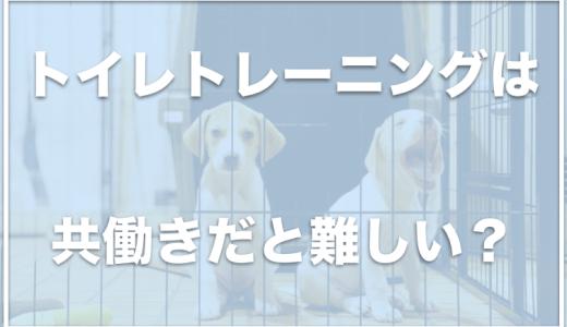 子犬のトイレトレーニングは共働きの夫婦こそ工夫しよう!ケージの外に出すと失敗する理由もチェック!