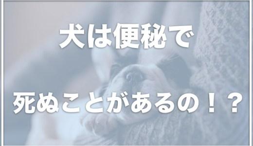 犬のうんちを促す方法は?犬は便秘で死ぬ?ぐったり・震えている場合は要注意!マッサージのやり方も紹介