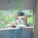 子猫が窓から手をふっている