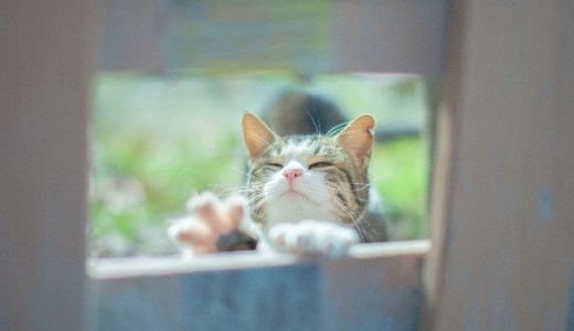 猫ブームが熱い!「ねこ検定」登場で経済効果はどうなる?!どんな問題が出るの?!