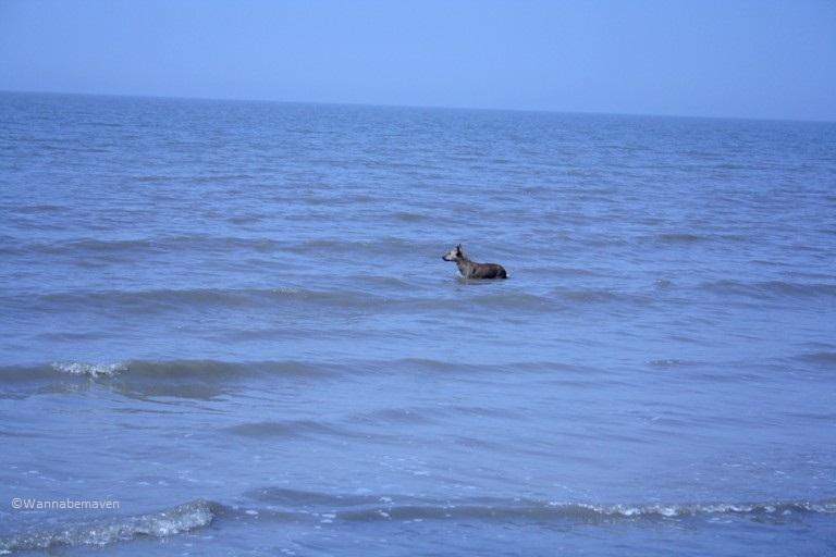Jhampore Beach - Daman - People of Gujarat