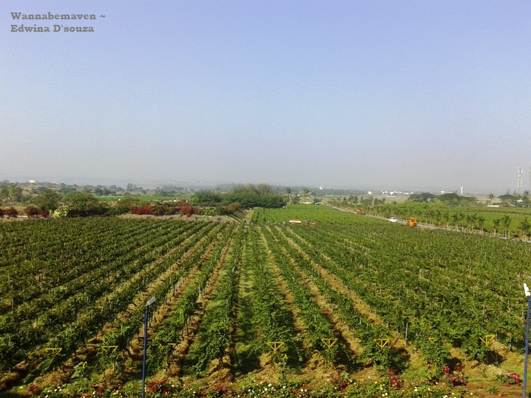 Sula Vineyards Tour Nashik (8)