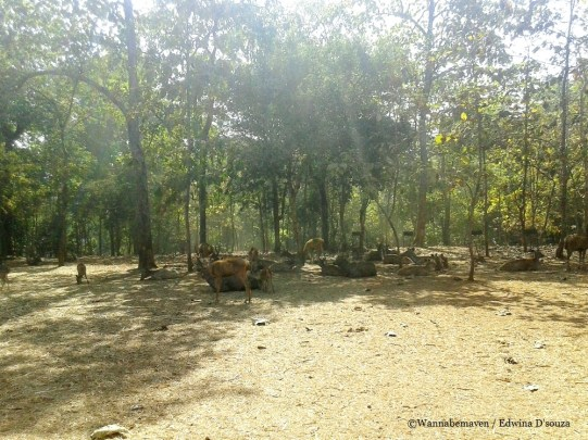satmalia Deer park-mumbai weekend getaway silvassa
