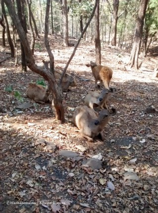 satmalia deer sanctuary-mumbai weekend getaway silvassa