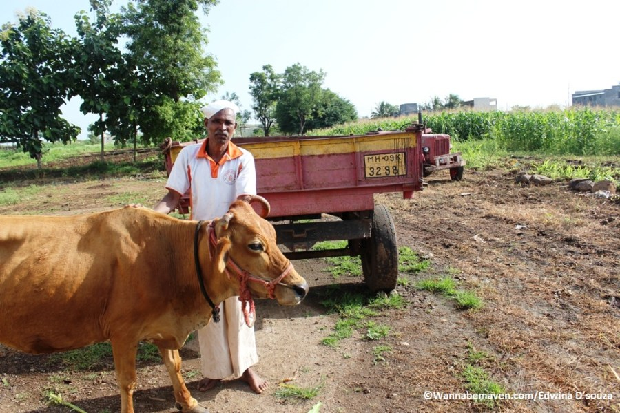 farming-in-phaltan-things to see in phaltan-Phaltan travel guide